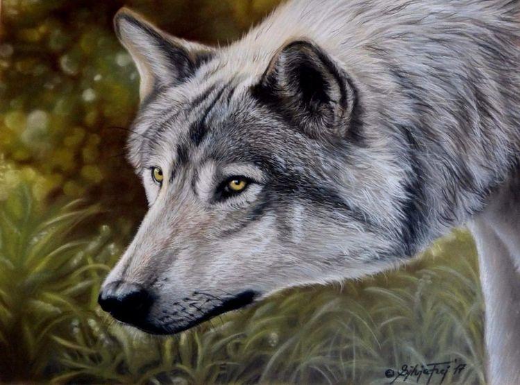 Wildtier, Pastellmalerei, Portraitzeichnung, Portrait, Wolfsportrait, Tierwelt