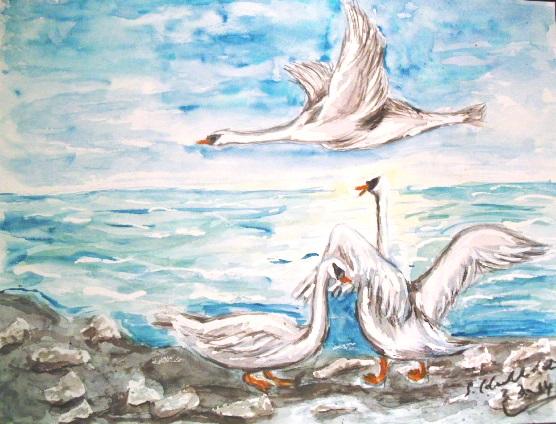 Schwan, Aquarellmalerei, Vogel, Wasser, Schwanenleben, Natur