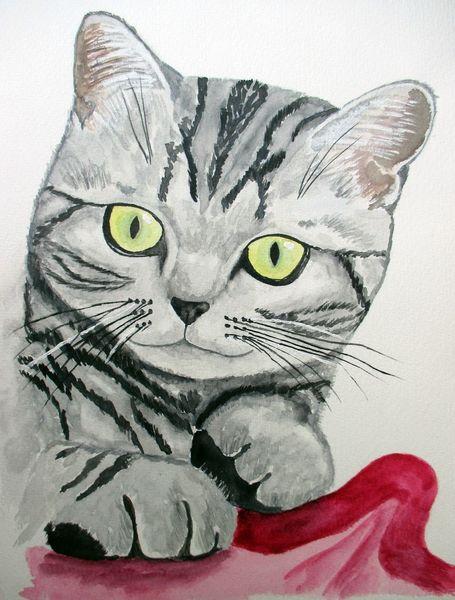 British kurzhaar, Katze, Aquarellmalerei, Aquarell