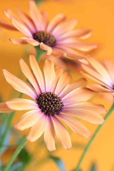 Orange, Makro, Nähe, Blumen, Fotografie, Blüte