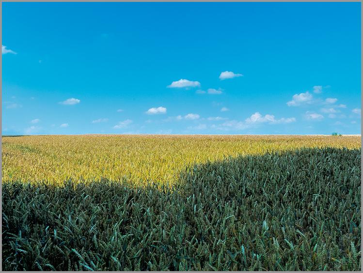 Landschaft, Weizenfeld, Digital, Fotografie