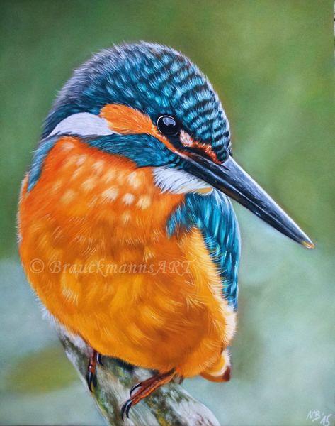 Eisvogel, Vogel, Zeichnung, Pastellmalerei, Natur, Schnabel