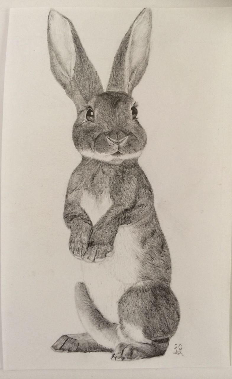 Hase grafit tiere fell realismus von elefantenfuss bei kunstnet - Hase zeichnen ...