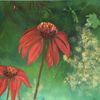 Sonnernhut, Rot, Blau, Blumen