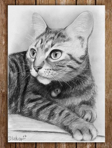 Tiere, Haustier, Bleistiftzeichnung, Katze, Zeichnungen