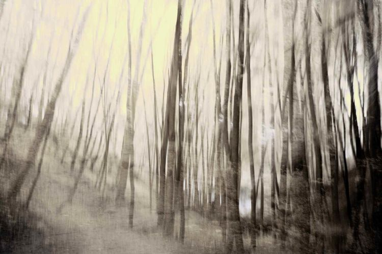 Surreal, Konzept, Wald, Landschaft, Licht, Dunkel