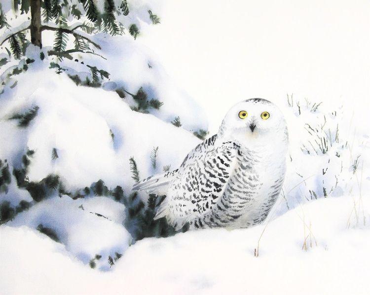Winter, Schnee, Landschaft, Eule, Aquarell