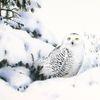 Eule, Winter, Schnee, Landschaft