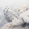 Schnee, Eule, Vogel, Winter