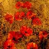Abstrakt, Blumen, Rot, Mohn