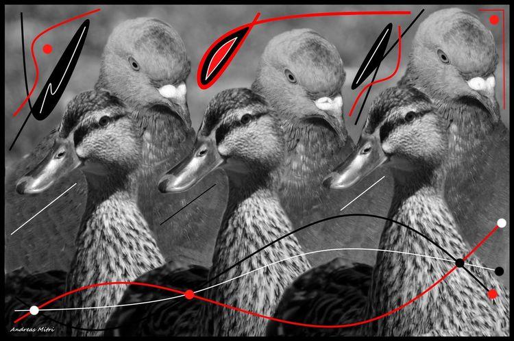 Fotografie, Schwarz, Tiere, Ente, Vogel, Freundschaft