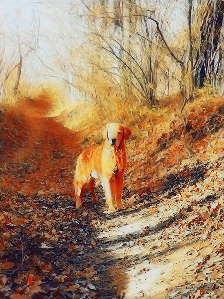 Hund, Tiere, Wald, Natur, Fotografie