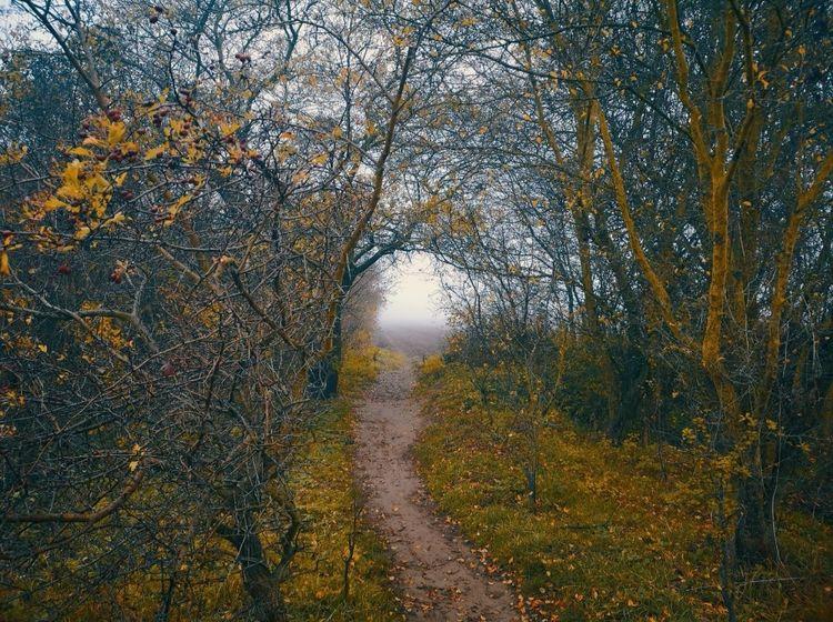 Wald, Pflanzen, Natur, Fotografie