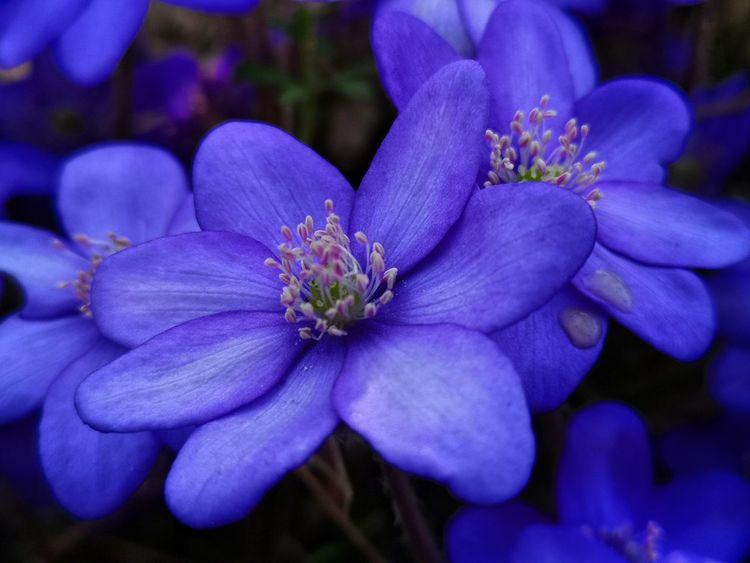 Pflanzen, Frühling, Blumen, Fotografie