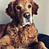 Hund, Tiere, Fotografie