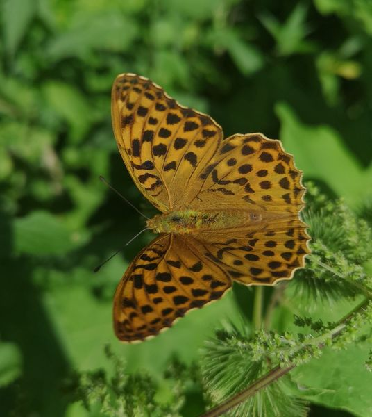 Natur, Tiere, Schmetterling, Fotografie