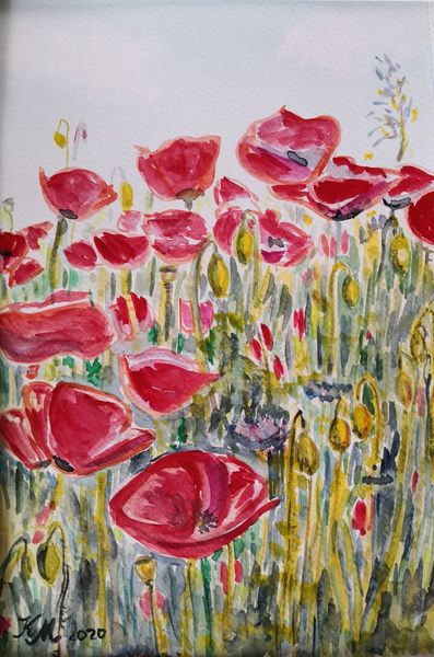 Sommer, Wiese, Mohn, Aquarell
