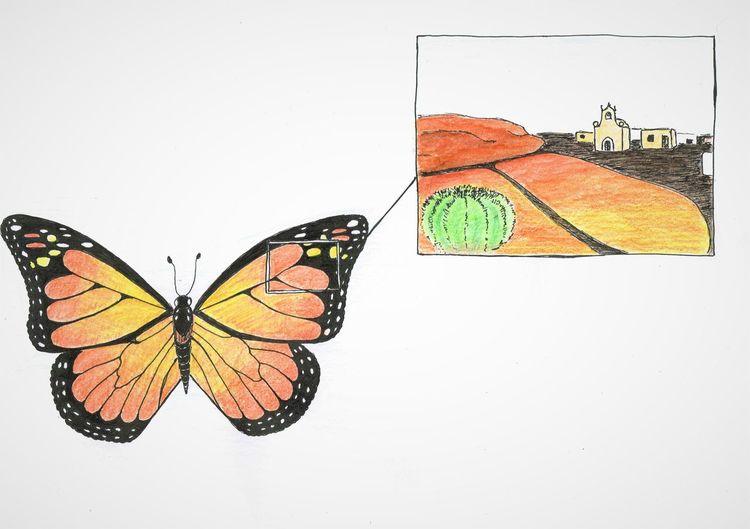 Monarchfalter, Navigation, Schmetterling, Orientierung, Zeichnungen