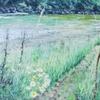 Wiese, Farben, Wasser, Malerei