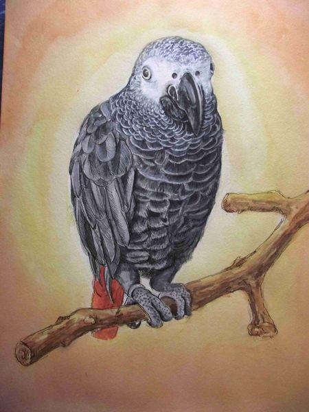 Schnabel, Papagei, Äste, Grau, Rot, Aquarell