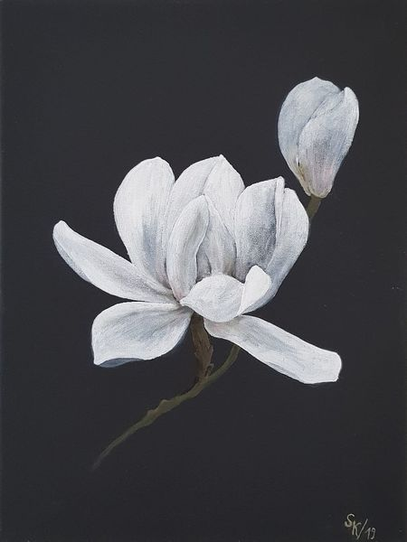Schwarz weiß, Blüte, Magnolien, Blumen, Malerei