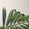 Schnitt, Palmblatt, Ausschnitt, Ölmalerei