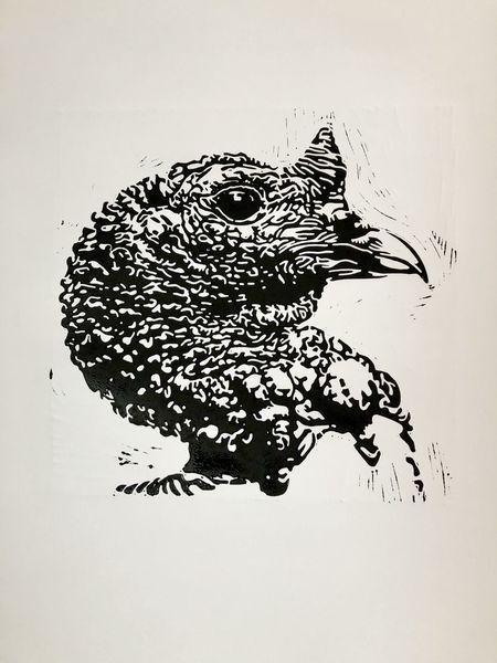 Pute, Vogel, Tiere, Lichtspiel, Nebenbeigekritzel, Linolschnitt