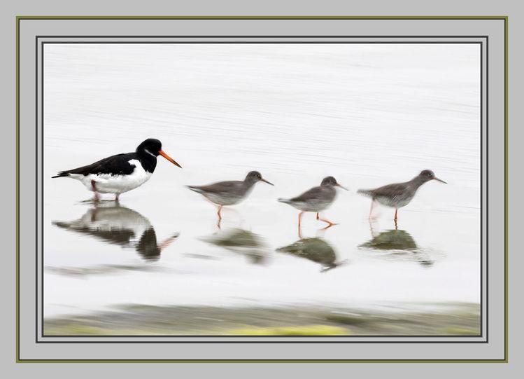 Vogel, Strand, Küste, Austernfischer, Wasser, Niederlande