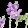 Aquarellmalerei, Veilchen, Pflanzen, Studie