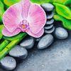Orchidee, Rosa, Blumen, Schwarz