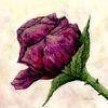 Rose, Blumen, Rot, Rosen blüte