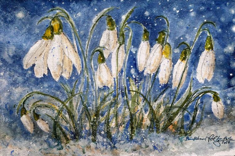 Winter, Niedersachsen, Schnee, Aquarellmalerei, Pflanzen, Schneeglöckchen