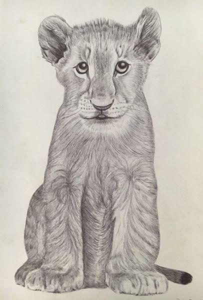 Zeichnung, Kugelschreiber auf zeichnungspapier, Junger löwe, Zeichnungen