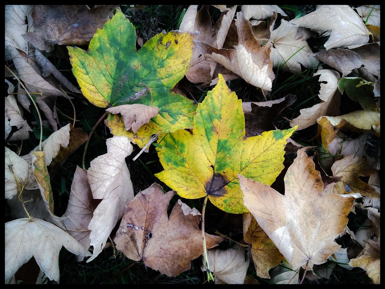 Bild Natur Fotografie Herbst Digitale Kunst Von Marietta Holzer Bei Kunstnet