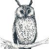 Vogel, Natur, Tiere, Federzeichnung
