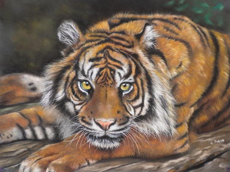 Kreide, Streifen, Fell, Tiger, Pastellmalerei, Tiere