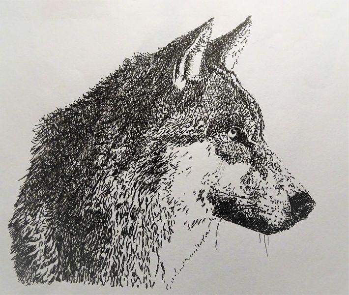 Kopf, Augen, Portrait, Monochrom, Tiere, Nase