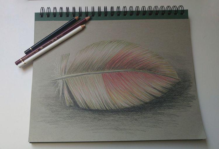 Feder, Buntstiftzeichnung, Zeichnungen, Tiere