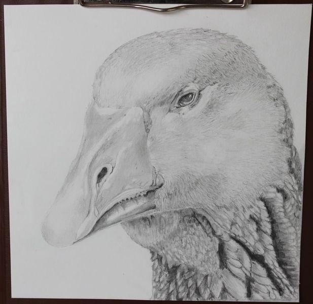 Bleistiftzeichnung, Gänse, Tiere, Zeichnungen