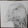 Gänse, Tiere, Bleistiftzeichnung, Zeichnungen