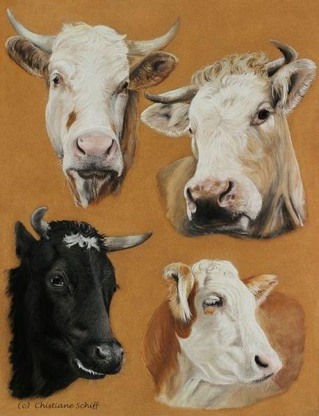 Rind, Kuh, Pastellmalerei, Tierportrait, Zeichnungen