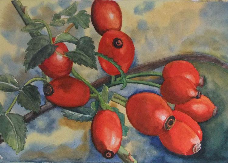 Zweig, Aquarellmalerei, Hagebutte, Rot, Beere, Grün
