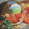 Ernte, Stillleben, Tomate, Aquarellmalerei