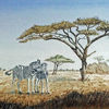 Zebra, Afrika, Steppe, Savanne