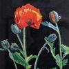 Aquarellmalerei, Knospe, Pflanzen, Klatschmohn