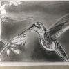 Bleistiftzeichnung, Kolibri, Schwerelos, Zeichnungen