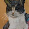 Katze, Tiere, Kreide, Zeichnungen