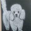 Hund, Pudel, Kreide, Zeichnungen