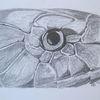 Bleistiftzeichnung, Tiere, Schlange, Zeichnungen