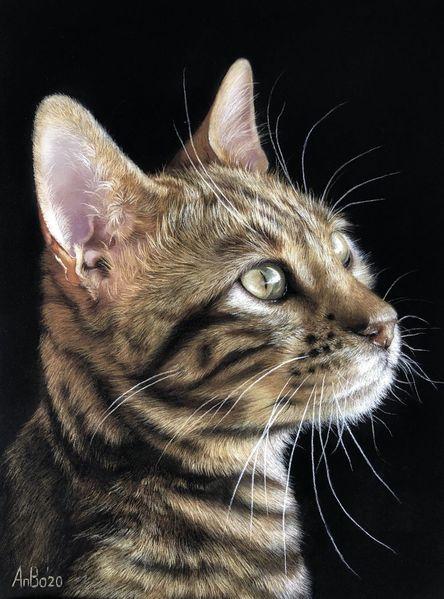 Pastellmalerei, Katze, Bengal, Tierportrait, Zeichnungen